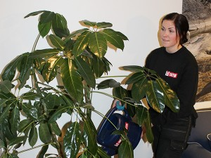 hyra växter Stockholm