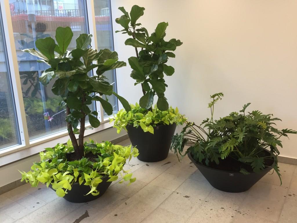 Växter entré