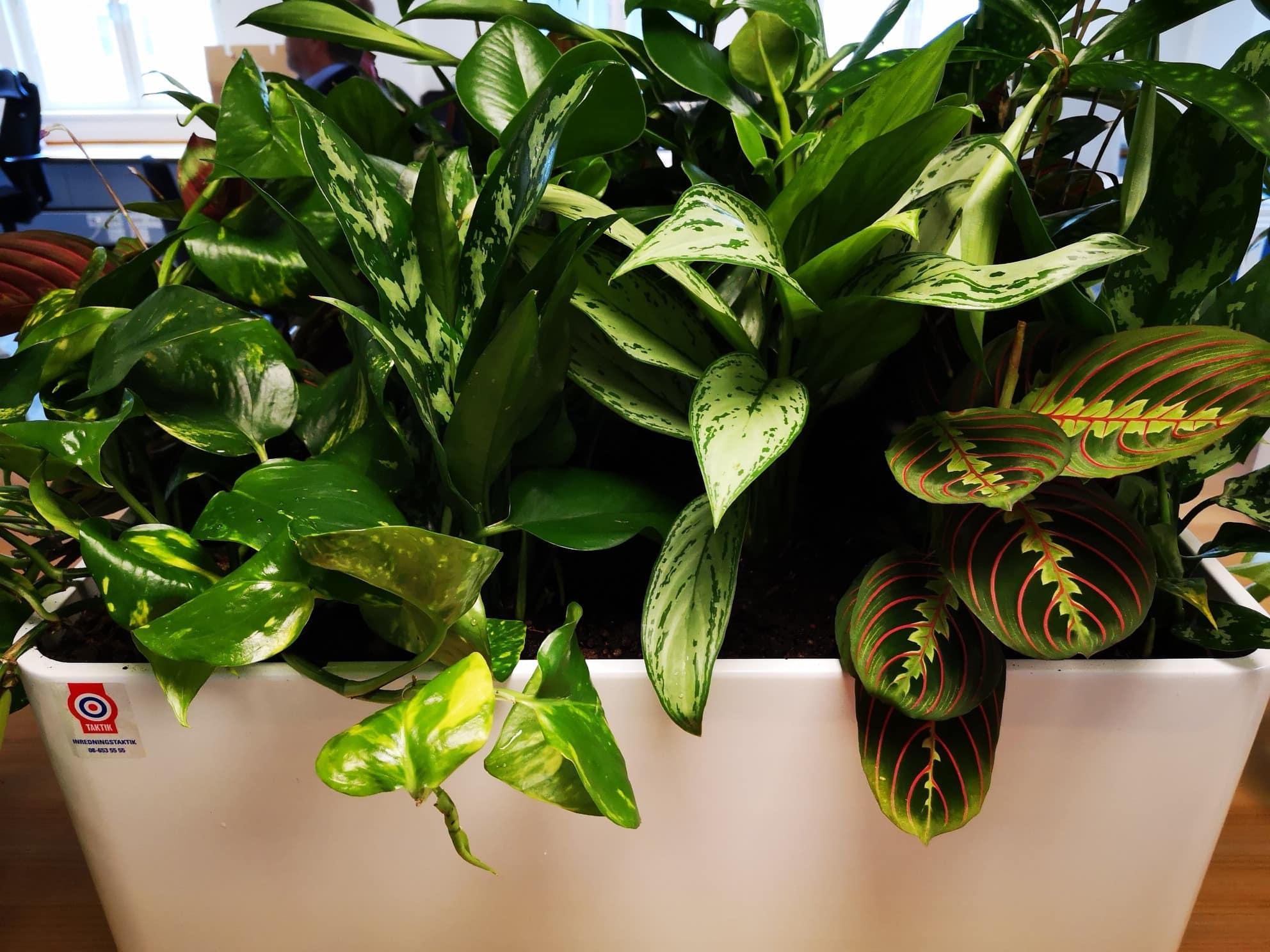 Växtservice - köp & hyr växter