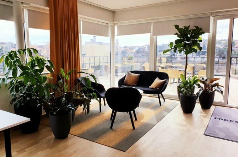 Nya växter i skön miljö.
